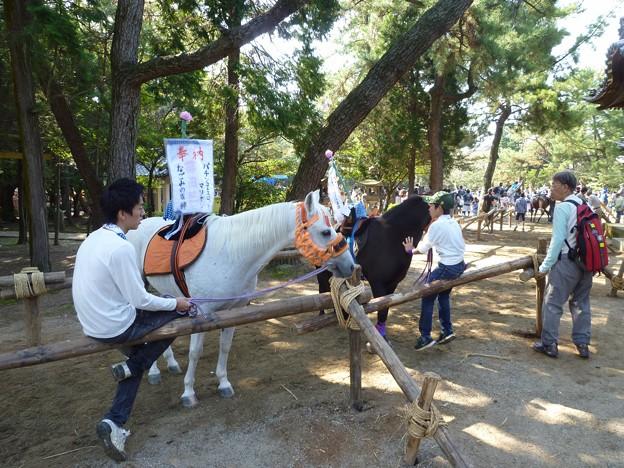 P1050248 大山緑地・春日神社(おまんと祭り会場)