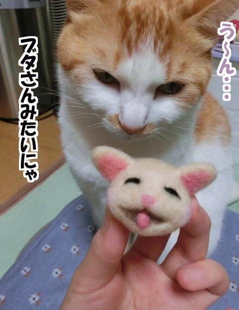 猫のつもりが・・・