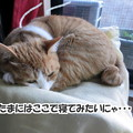 他の猫の寝床