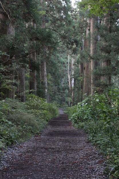 昼なお暗き杉並木1