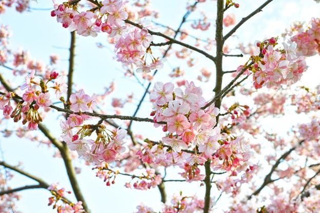 Photos: 春はもうすぐ。