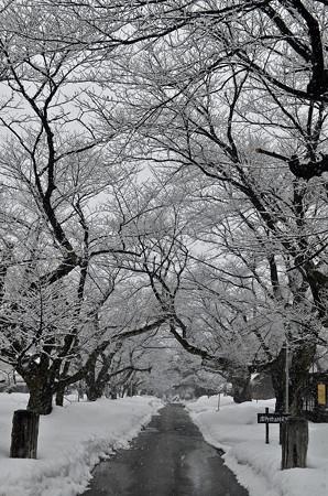 160206雪の降る景色02