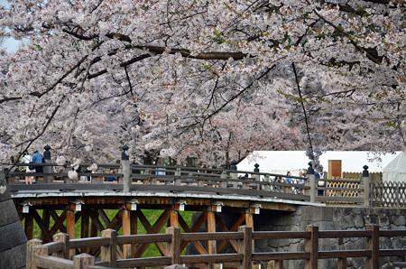 160416霞城公園の桜01