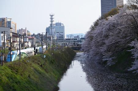 160416霞城公園の桜と山形新幹線