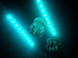 アルネ津山ペンギンと奇跡の海の大冒険 (2)