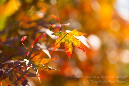 秋色に向かって変化中