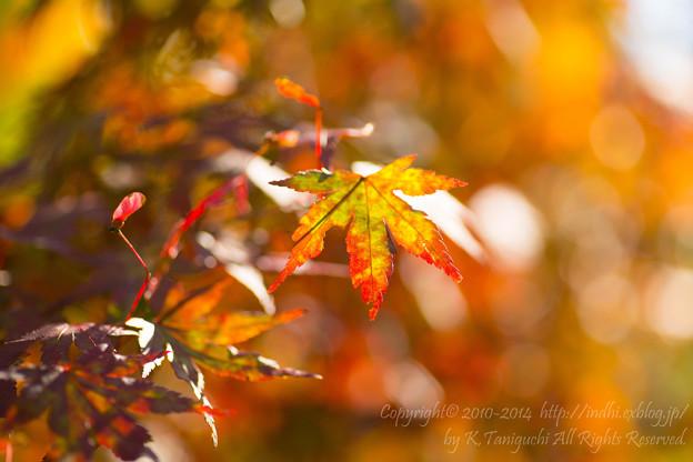Photos: 秋色に向かって変化中