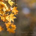 Photos: _37A7331