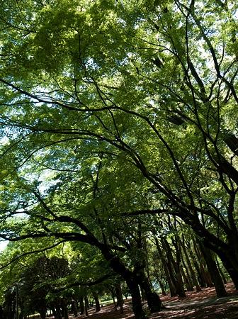 昼GRD4(木々)
