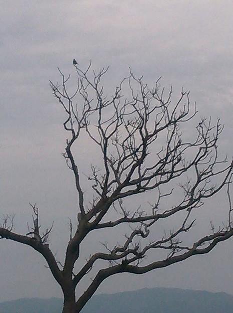 Photos: 鳥さんも。
