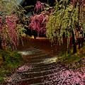 Photos: 雨降りの梅園