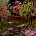 写真: 雨降りの梅園