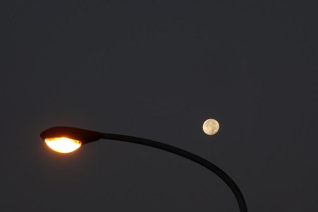 Photos: 月と外灯