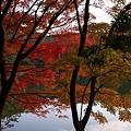 秋の修法ヶ原