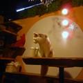 Photos: 猫カフェの猫ちゃんたち