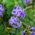 Photos: 路地に咲く花