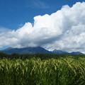 Photos: 稲穂と八ヶ岳