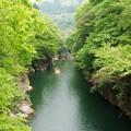 Photos: 渓谷の春