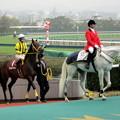 Photos: 誘導されるギュスターヴクライと福永祐一騎手
