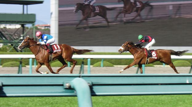 シュヴァルグランがタンタアレグリアを振り切って初重賞制覇