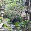 若女将は紅葉がお好き 「萬重」の坪庭 Tsuboniwa