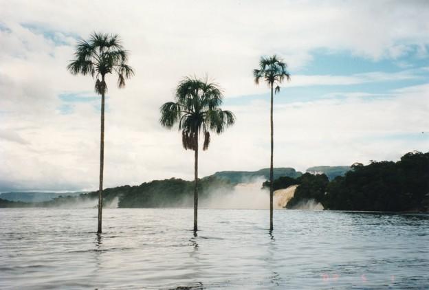 ギアナ高地のカナイマ湖 Palm trees in the  Canaima Lagoon *椰子の木の三(み)つ立ち並ぶ向うには飛沫にけぶる滝ぞ轟く