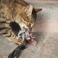 猫の餌食 Food for a stray cat