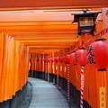 Photos: 稲荷山 宵赤提灯 道行千鳥足の石段 To the Inariyama summit