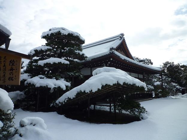 金閣寺 陸舟の雪松 Snow covered Rikushu Pine, Kinkakuji*陸舟の松(りくしゅうのまつ)や着せ綿の如き雪