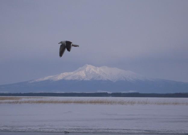 雪の斜里岳と鳥