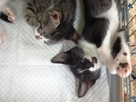 kouさん保護猫「幸せな寝顔ニャ」