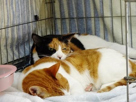 バジル「お母さんと一緒♪」 オリーブ「・・・暑苦しい・・・」