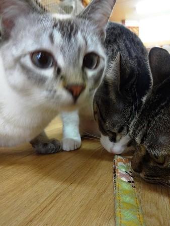 ジャワ&リゼ&沙羅「魅力的ー」