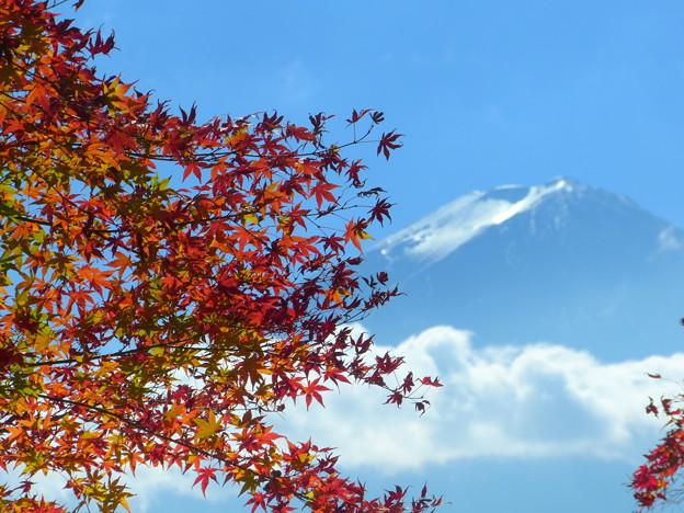 Photos: 2015/11/16・・・お山と紅葉?01