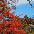 写真: 岡山吉備津神社の紅葉 ☆