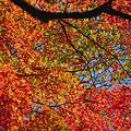 空を埋める紅葉
