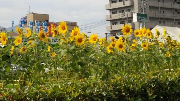 Photos: 2014-07-21 18.14.47