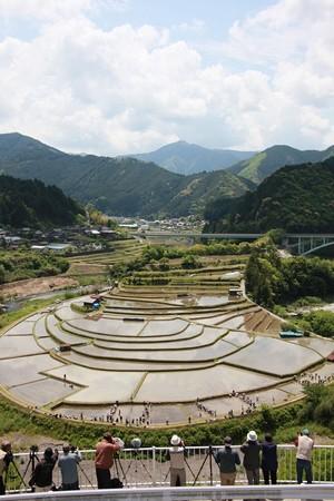 あらぎ島田植え体験