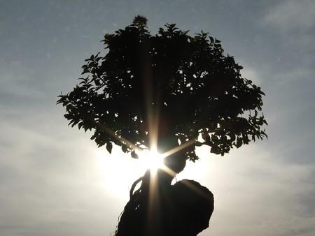 01 斜光射す大樹