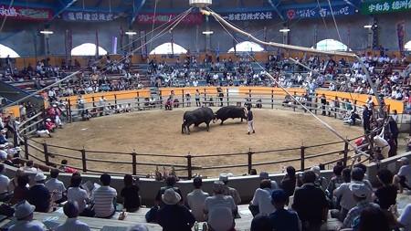 宇和島闘牛和霊大祭場所13