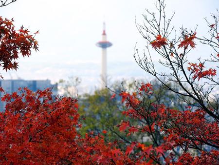清水寺(昼)09 タワーに寄り添う楓達
