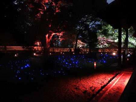 青蓮院門跡(ライトアップ)10