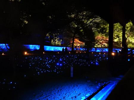 青蓮院門跡(ライトアップ)11