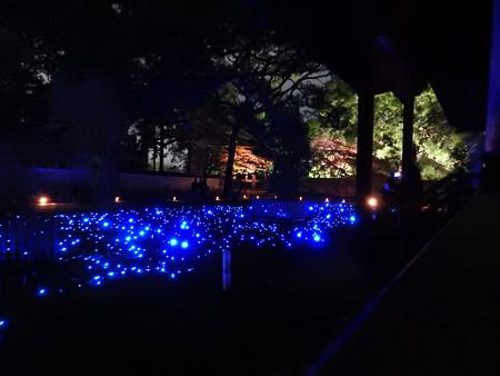 青蓮院門跡(ライトアップ)12