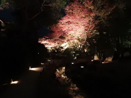 青蓮院門跡(ライトアップ)21