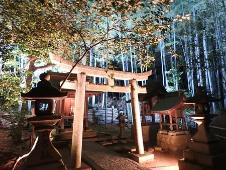 青蓮院門跡(ライトアップ)30
