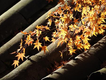 東福寺66
