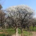写真: 梅林公園9