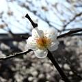 写真: 梅林公園12