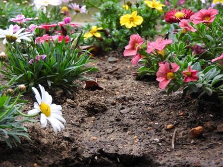 庭 花の小路2